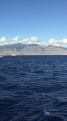 Maui Breeching Whales, Hawaii